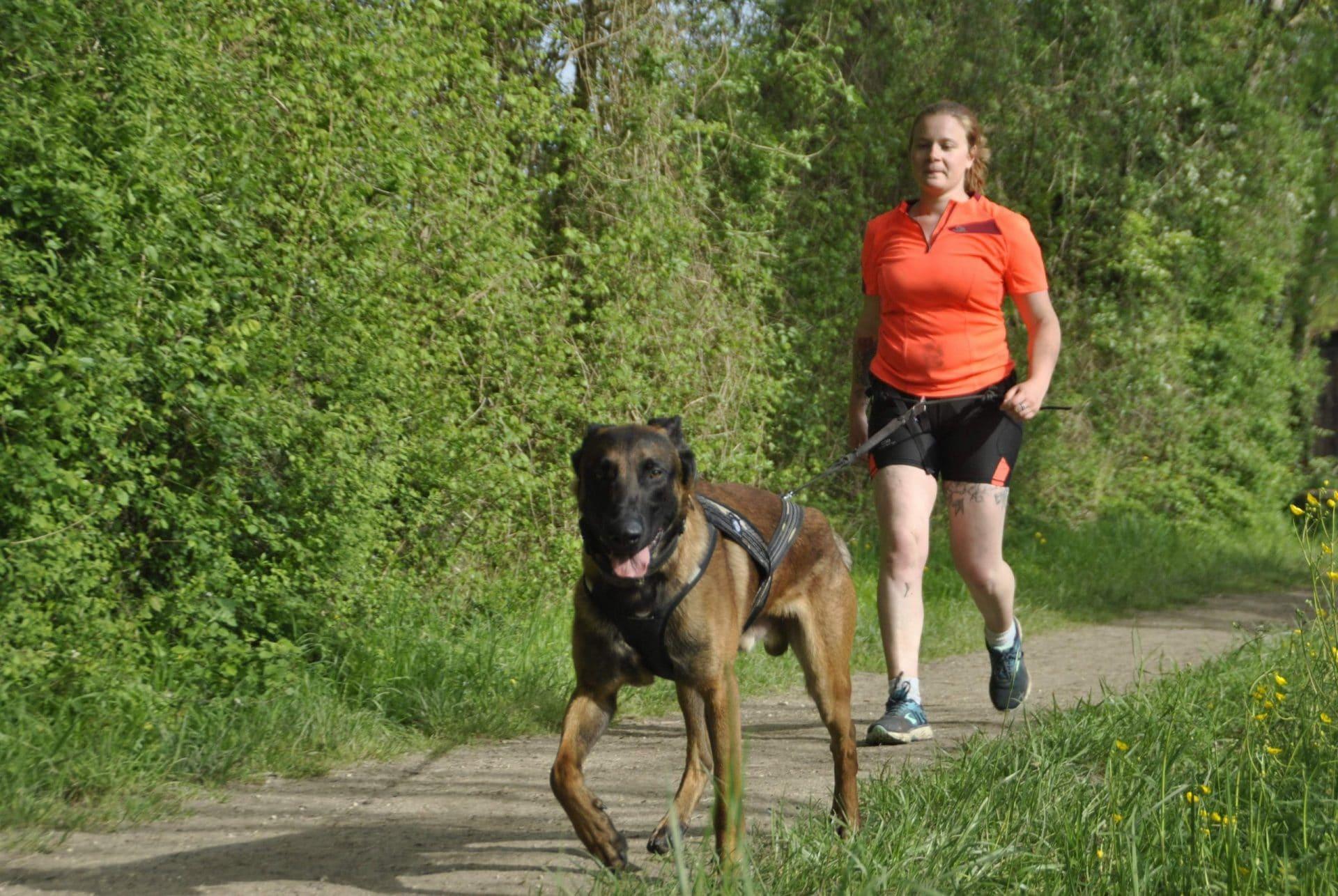 femme cani marche avec chien type malinois de face harnais ligne de trait harnais verdure