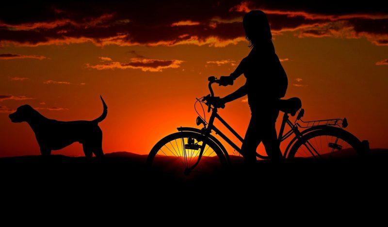 edukachien, aurélie frérou, education canine, comportementalisme canin a domicile, 44.49.85.53;cani velo