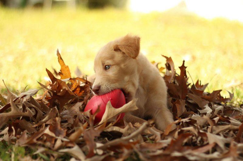 edukachien, aurélie frérou, education canine, comportementalisme canin a domicile, 44.49.85.53;jouet chiot