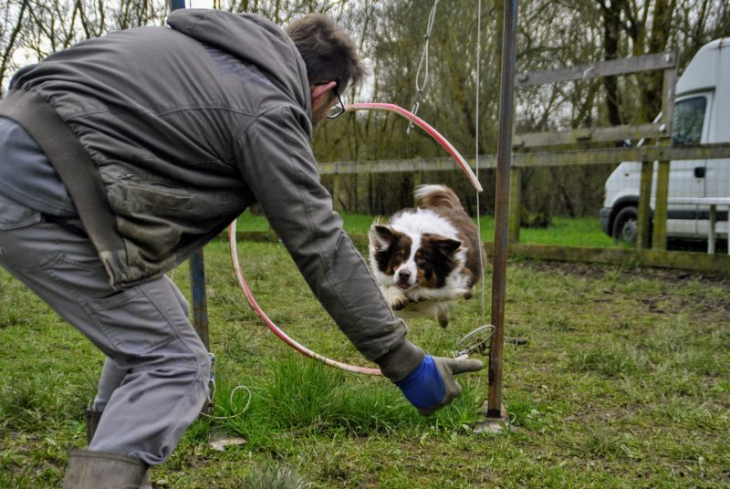 edukachien, aurélie frérou, education canine, comportementaliste canin; 44.49.85.53, agility 1