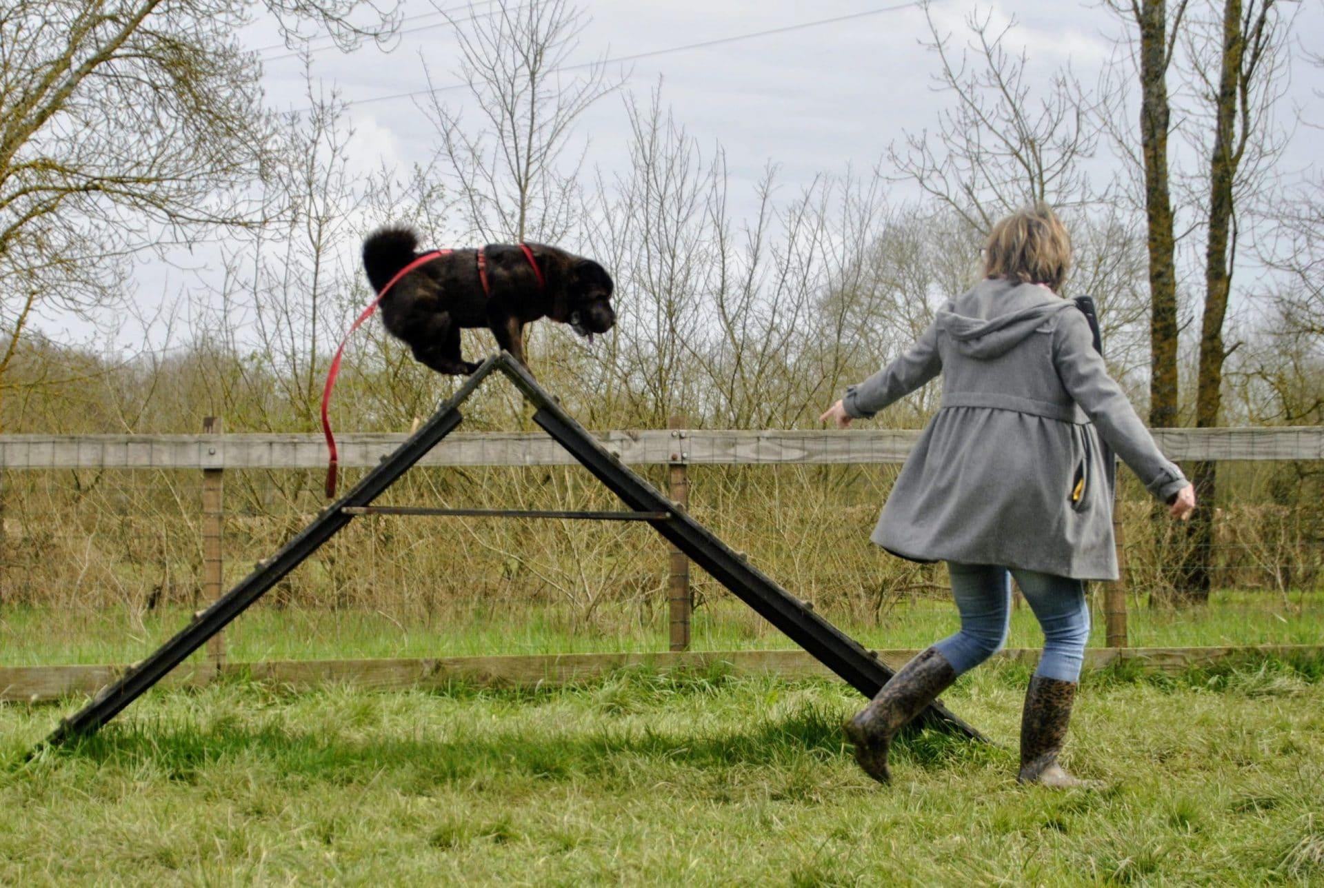 edukachien, aurélie frérou, education canine, comportementaliste canin, 44.49.85.53, agility 2
