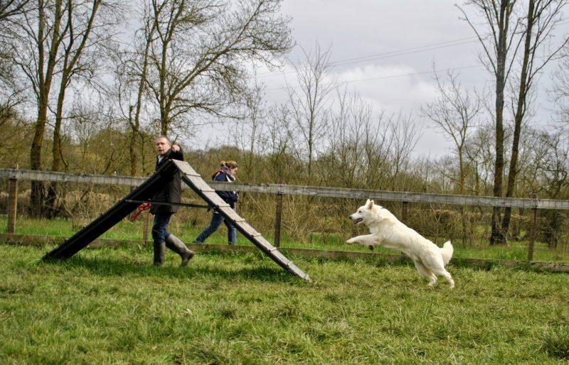 edukachien, aurélie frérou, education canine, comportementaliste canin, 44.49.85.53, agility 4