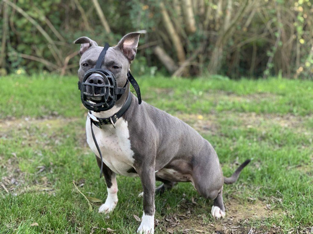 edukachien, aurélie frerou, education canine et comportementalisme canin a domicile, attestation d aptitude 3