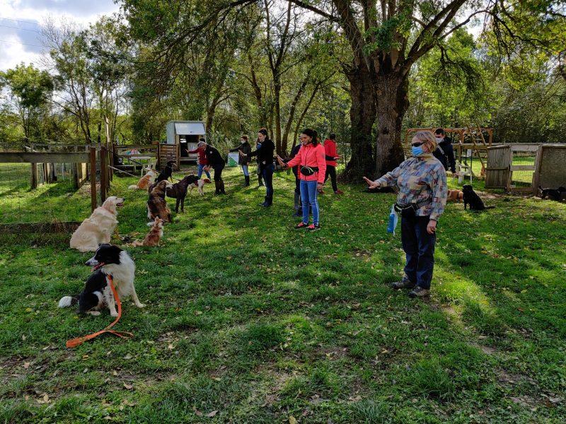 edukachien, aurélie frerou, education canine et comportementalisme canin a domicile, cours collectifs3