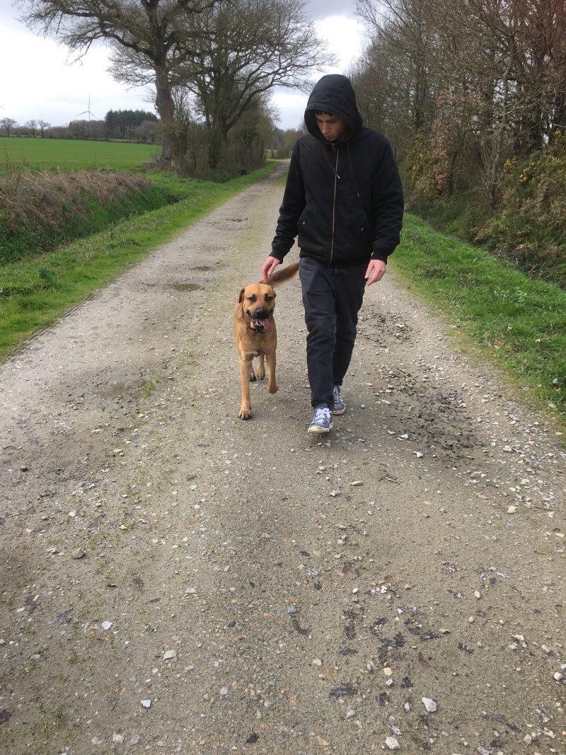 EdukaChien cours éducation canine balade chien sans laisse après rééducation individuelle à domicile