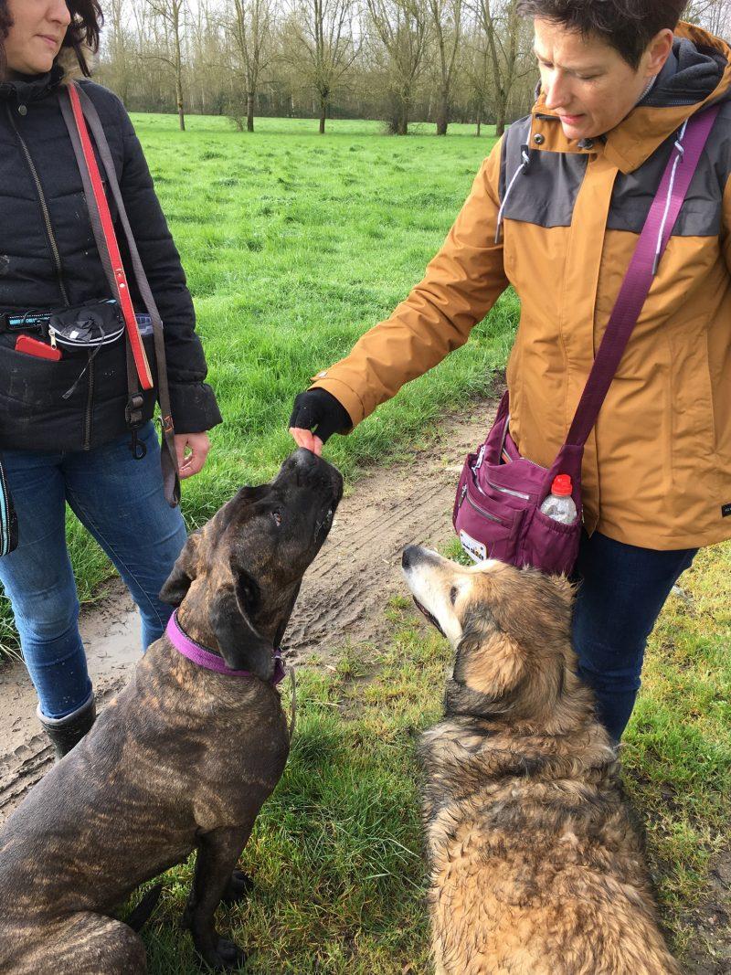 edukachien, aurélie frerou, education canine et comportementalisme canin a domicile, formation educ 3