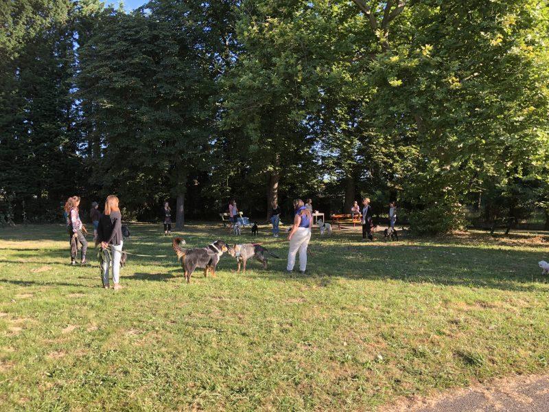 edukachien, aurélie frerou cours éducation canine en extérieur en loire-atlantique plusieurs races de chiens parc verdure
