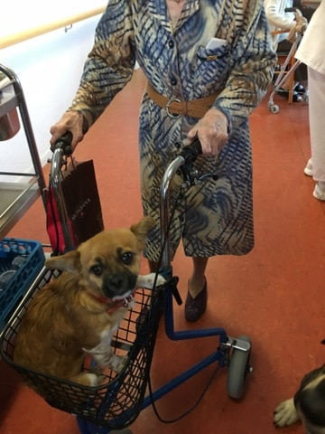 edukachien, aurélie frerou, education canine et comportementalisme canin a domicile, mediation animale en ehpad 2