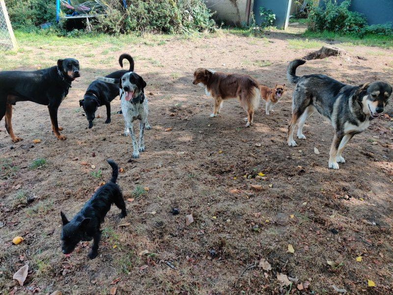 edukachien, aurélie frerou, education canine et comportementalisme canin a domicile,reeducation par la meute 1