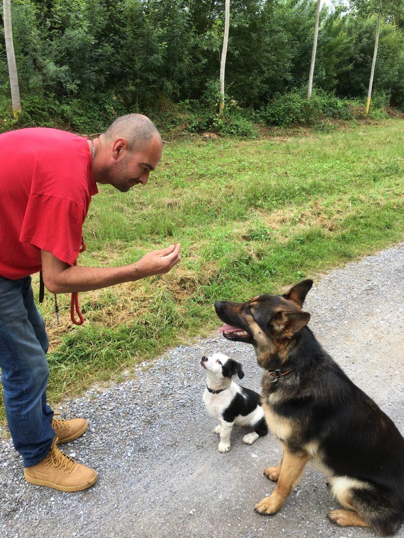 edukachien, aurélie frerou, education canine et comportementalisme canin a domicile,seance individuelle et personnalise