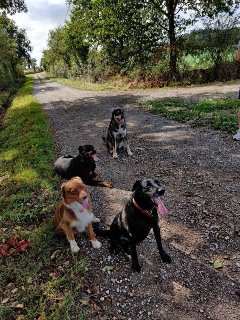 edukachien, aurélie frerou, education canine et comportementalisme canin a domicile,socialisation