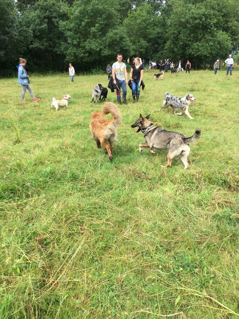 edukachien, aurélie frerou, education canine et comportementalisme canin a domicile,stage theoric et pratique gestion rencontres canines