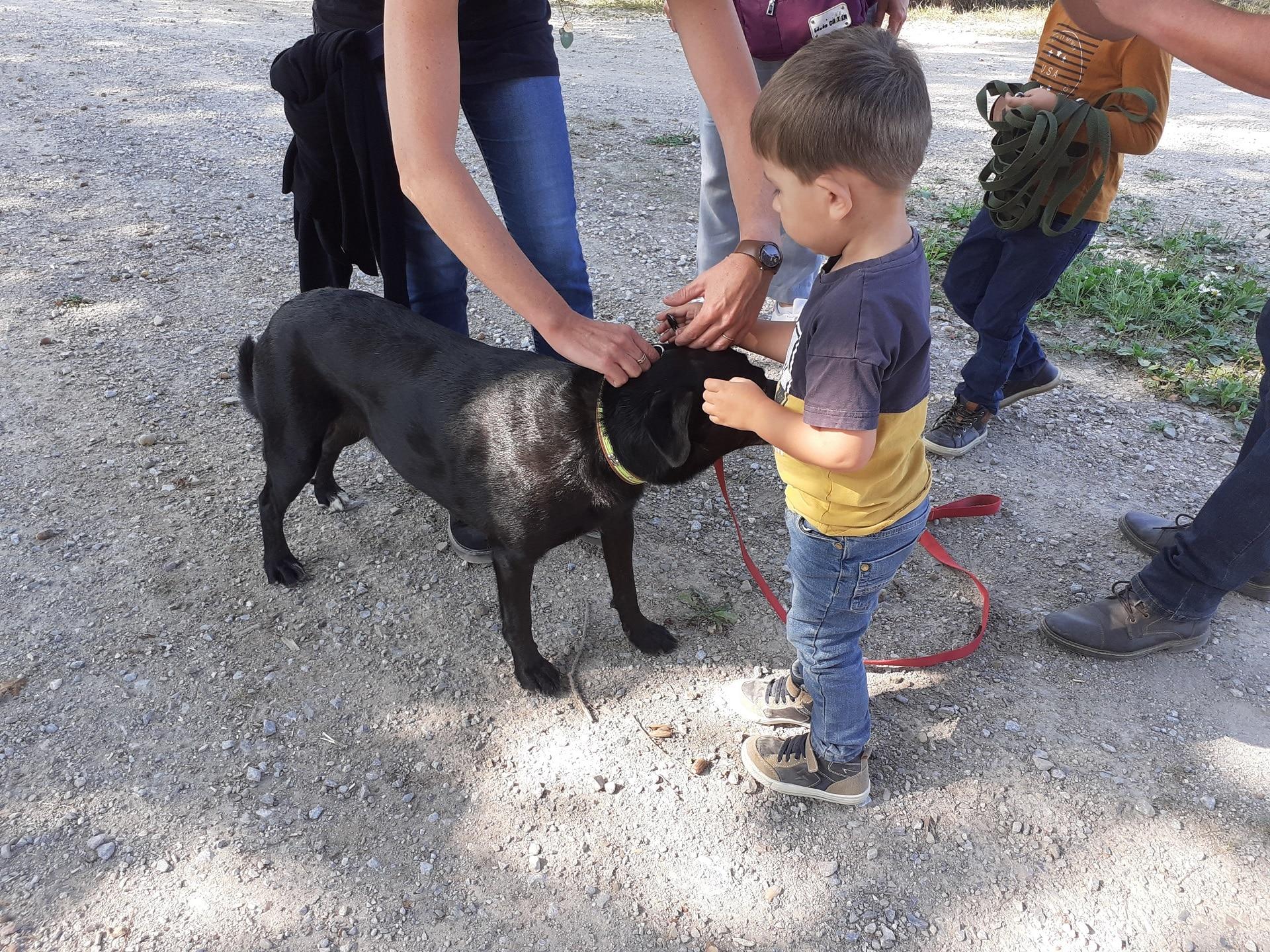 thylio-phobie-chiens-desensibilisation-peur-enfant-edukachien-stage-aurelie-frerou-44.49.85.53.35-education-canine