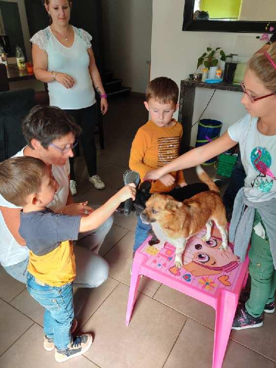 thylio phobie chiens, desensibilisation, stage, seance, enfant, education canine, comportement, eduka'chien, aurélie frérou, 44.49.85.53.35